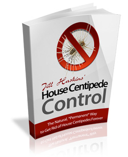 house centipedes Control: The Ultimate Guide to Get Rid of house centipedes